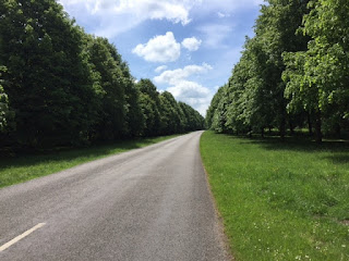 Clumber Park lime avenue