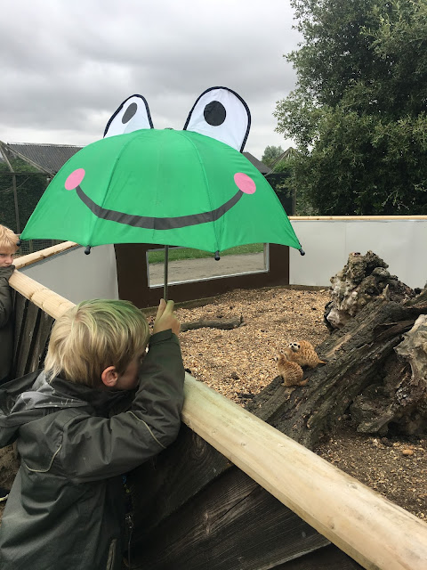 meerkats watch boy with frog umbrella
