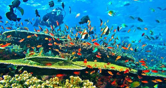tempat snorkeling di pulau komodo