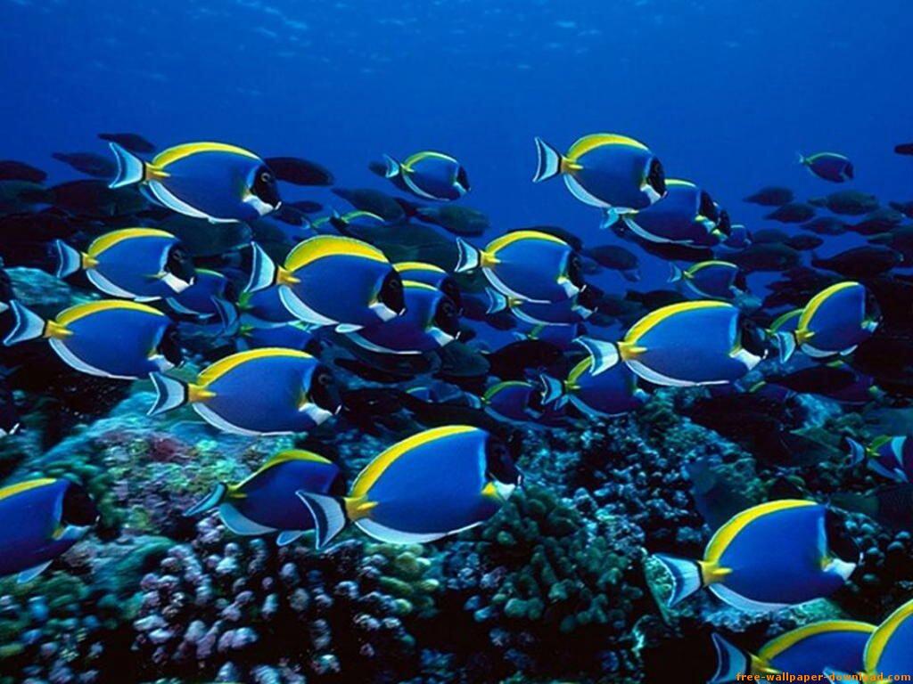 Un Mundo De Sensaciones: Imágenes Del Fondo Del Mar