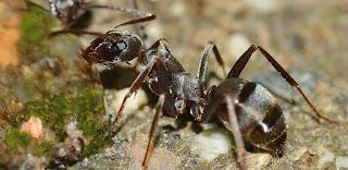 Bolehkah Membunuh Semut Yang Ada di Rumah