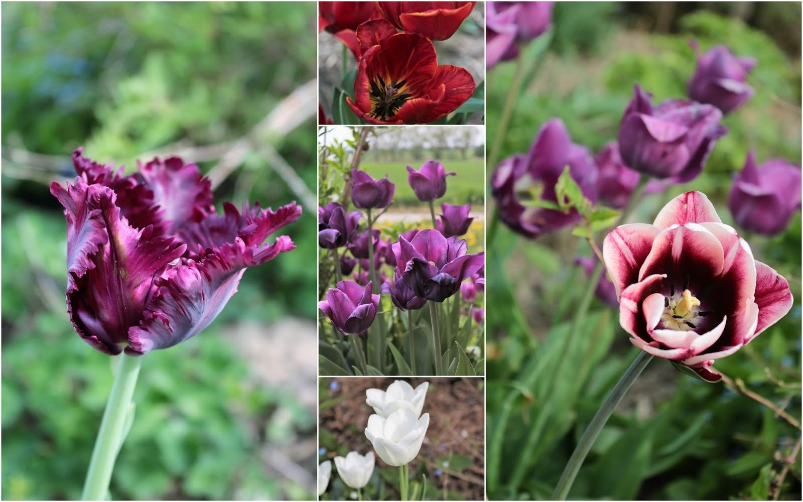 Frühling! oder ein Blütenmeer im Garten