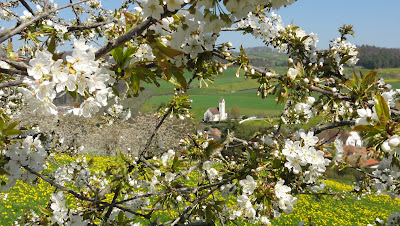 Kirche Diegten mit Kirschblüte