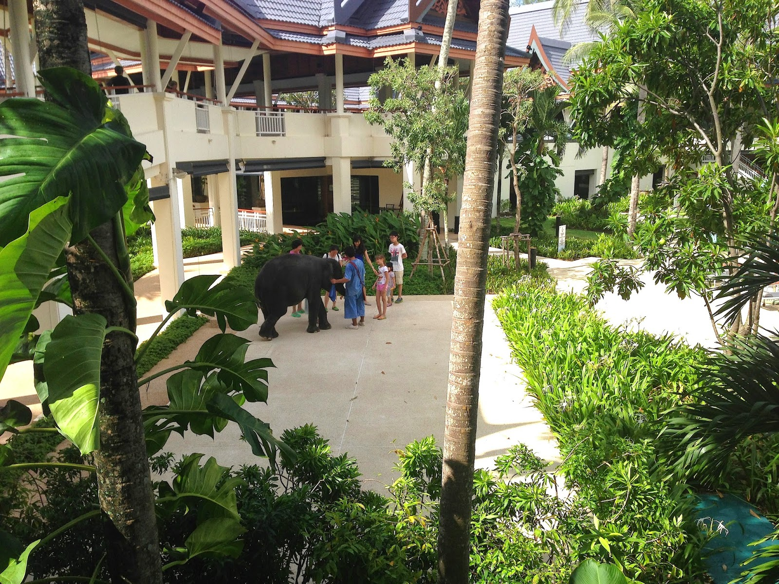 Elephant, Outrigger Laguna Phuket Beach Resort