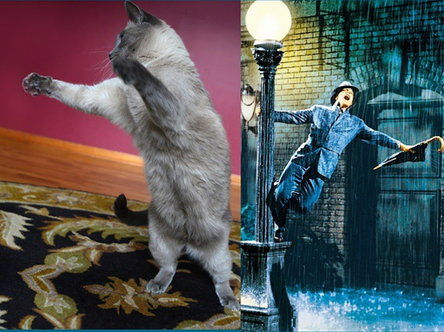 Maxwell dances with Fred Astaire #doppelgangercats #DanceMaxie #dancingcats