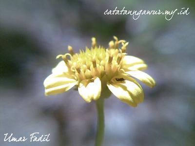 Bunga rumput liar yang masih segar