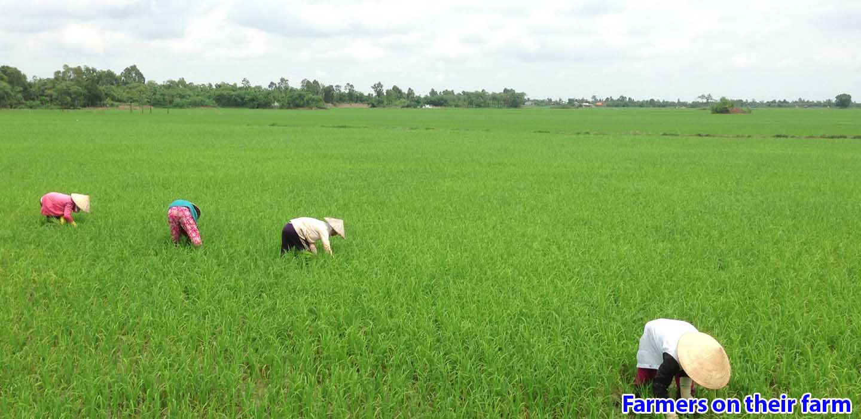 real-mekong-delta-tour-Farmers-on-their-farm