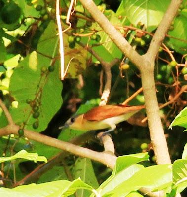 birdwatching laguna de apoyo