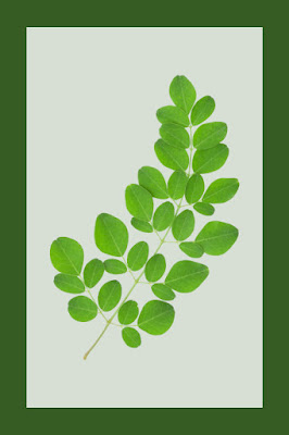 "Why Moringa Is the New ""It"" Elegance Component You Need to Know About"