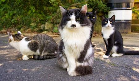 Cats Wanting Human Food