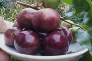 15 Top health benefits of Plums