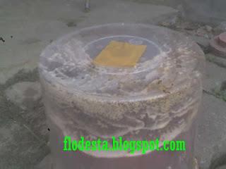Cara Membersihkan  Sarang Semut di Toples