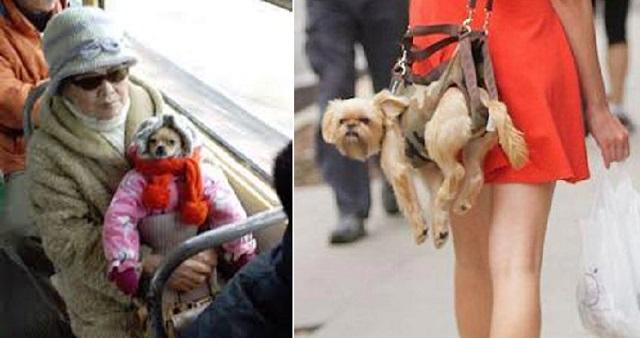Βρετανία: Τέλος στην πώληση σκύλων και γάτων στα pet shops