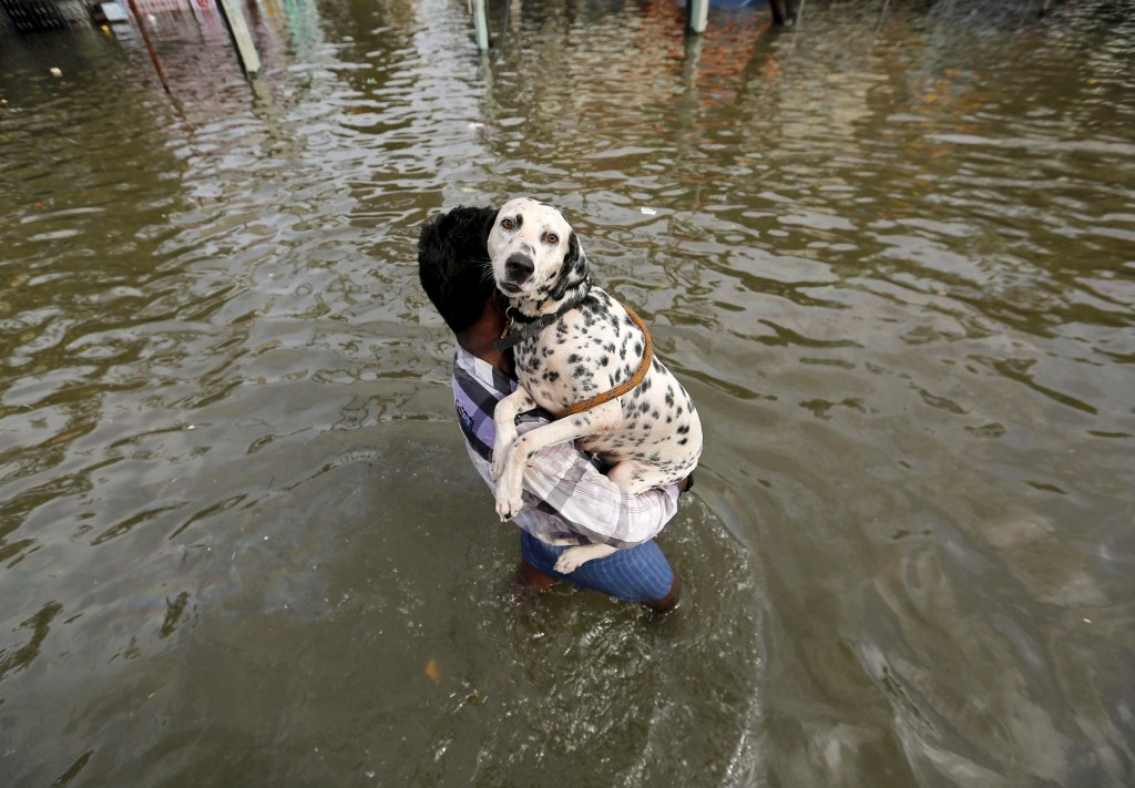 70 Of The Most Touching Photos Taken In 2015 - A man carries a dog as he wades through a flooded street in Chennai, India.