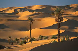 Vegetação e fauna do Sahara