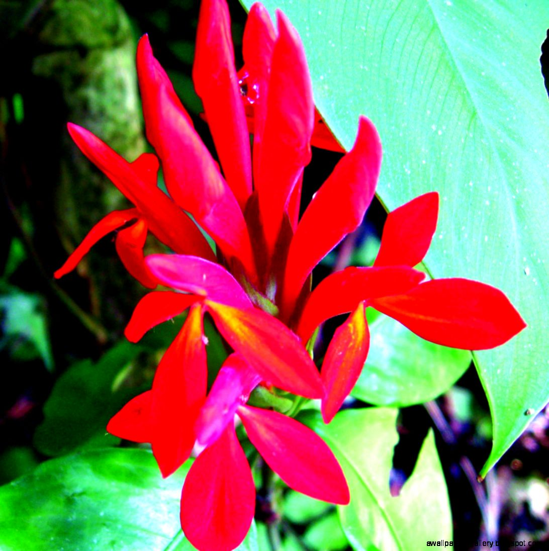 Amazon Rainforest Animals And Plants