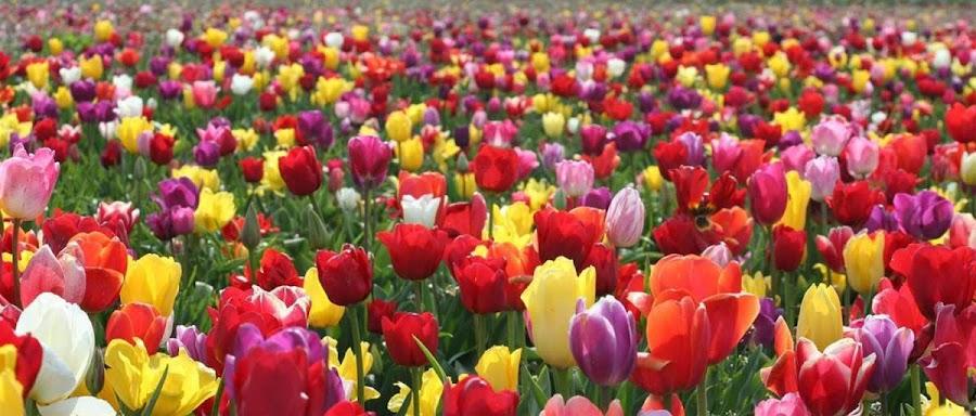 Las flores aportan colorido, alegría y buenas vibraciones
