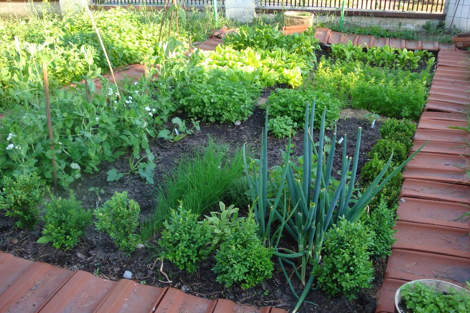 mały warzywnik w leśnym ogrodzie