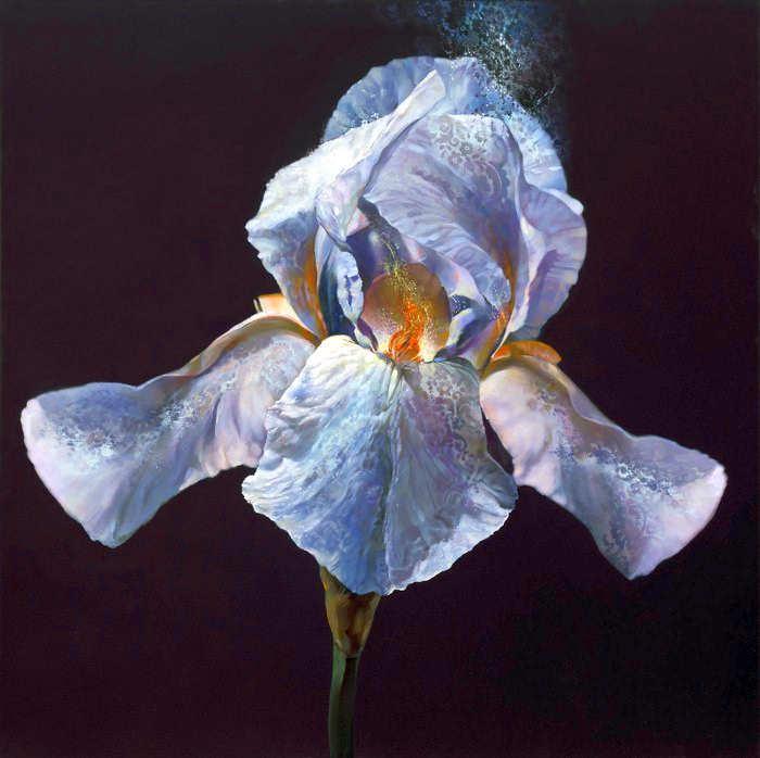 Рисунки цветов. Carmelo Blandino 23