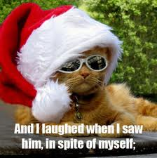 Funny Cat Pictures At Christmas With Captions