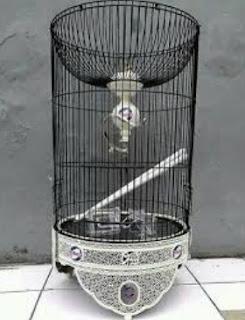 Kisaran Harga Sangkar Burung Lovebird Terbaru Bulan Desember 2018