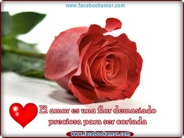 Rosas Rojas Con Frases De Amor: ROSAS....PARA TI