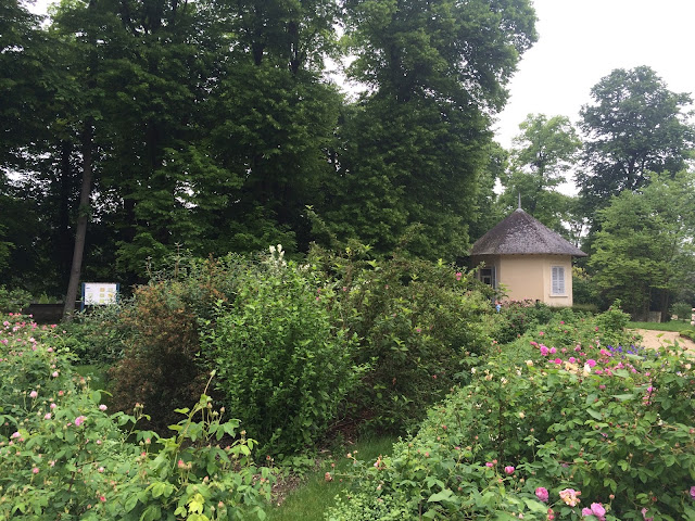 Garden of old roses, Château de Malmaison, France