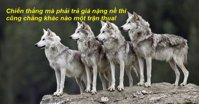 """Câu chuyện chó sói xung trận - hãy """"lạnh lùng"""" như bầy sói khi chọn cách đối đầu với thử thách"""