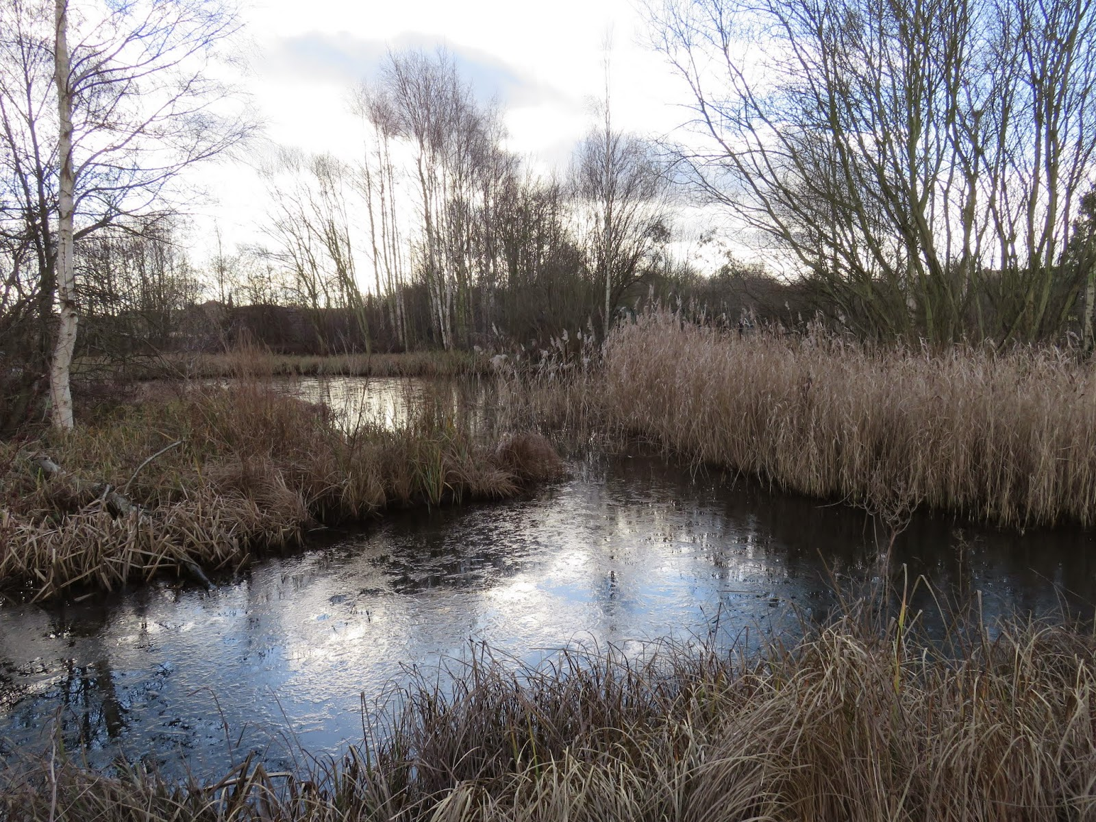 Frozen pond at the WWT London wildlife sanctuary near Hammersmith