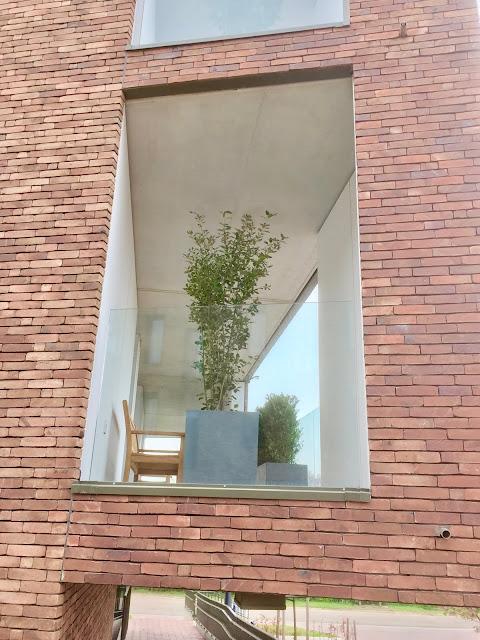 Verhuur van planten voor buitenruimte patio mezzanine terras of balkon. Regio Hasselt Genk Maasmechelen Lommel Beringen Sint-Truiden Tongeren Lummen Geel Herentals Antwerpen Brussel