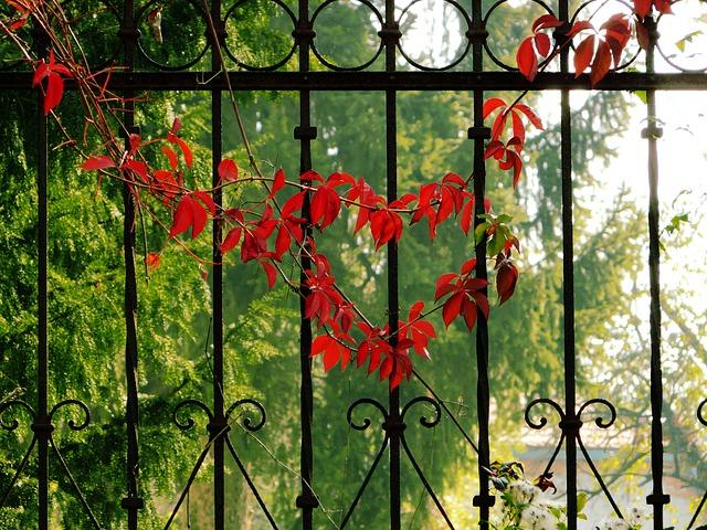 ảnh hàng rào mùa thu