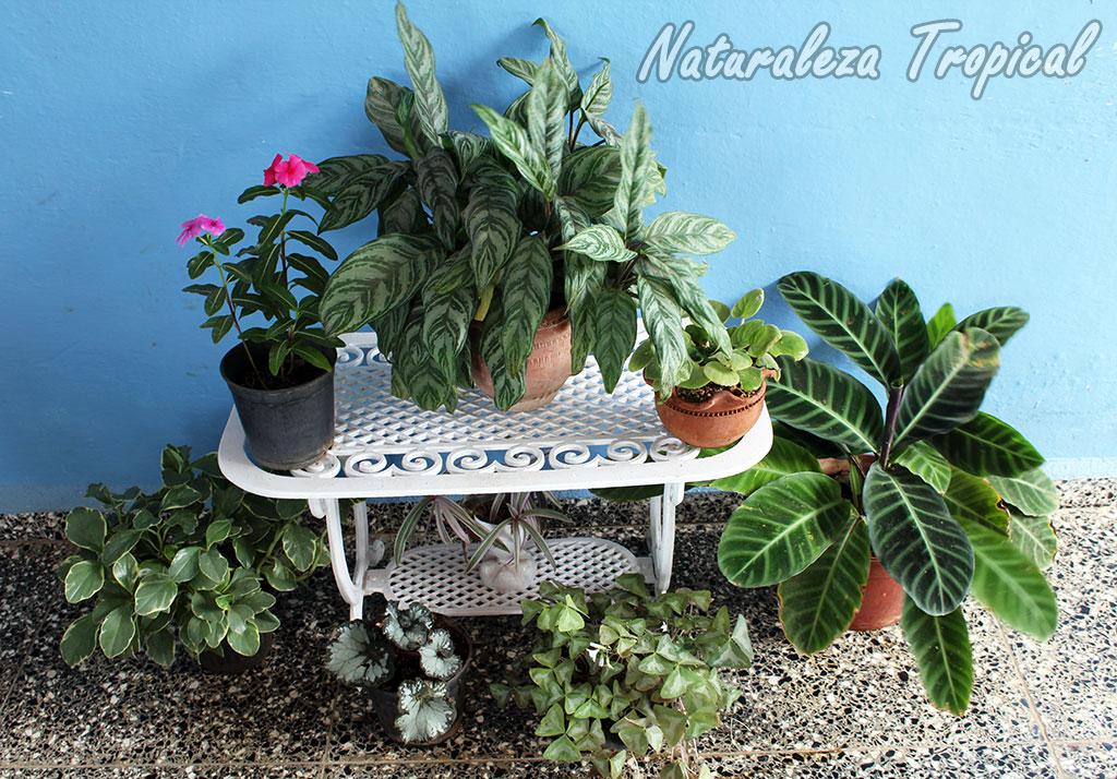 Naturaleza tropical aspectos a tener en cuenta si quieres - Ideas para decorar terraza atico ...
