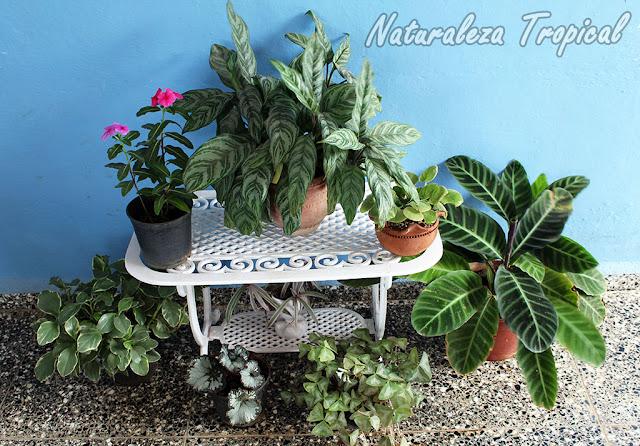 Conjunto de plantas ornamentales adornando una terraza
