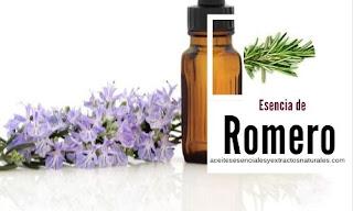 La esencia de romero es de las más utilizada en aromaterapia y tratamientos naturales