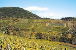 Vineyard Kastanienbusch in Birkweiler by F. Wehrheim