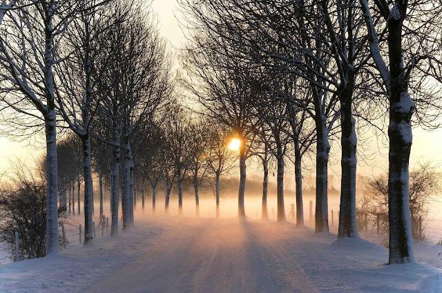 Besneeuwde weg, bomen, mist en ondergaande zon