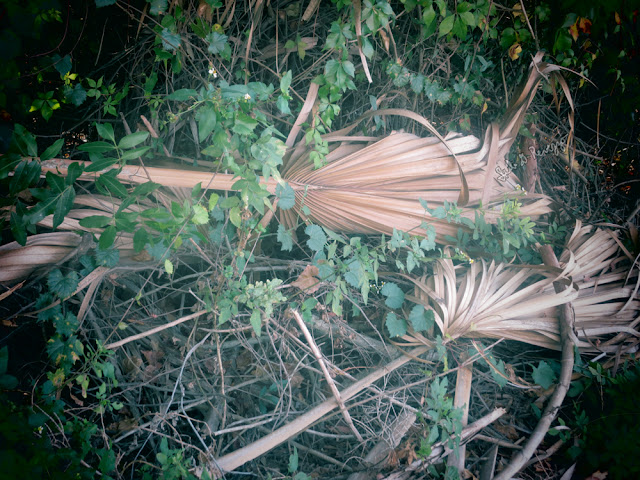 palm fronds by and copyright to Juli D. Revezzo, December 2016