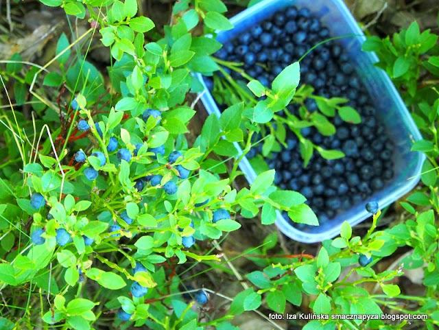 jagody ,  las w wawrze , lasy mazowieckie , grzybobranie , wycieczka , na grzyby , na jagody , co słychać w lesie , las lipcowy , prosto z lasu , wieści podmiejskie , grzyby ,