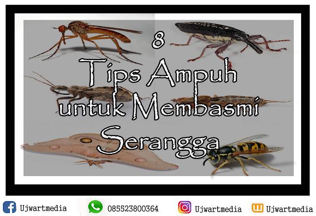 8 Tips Ampuh untuk Membasmi Serangga