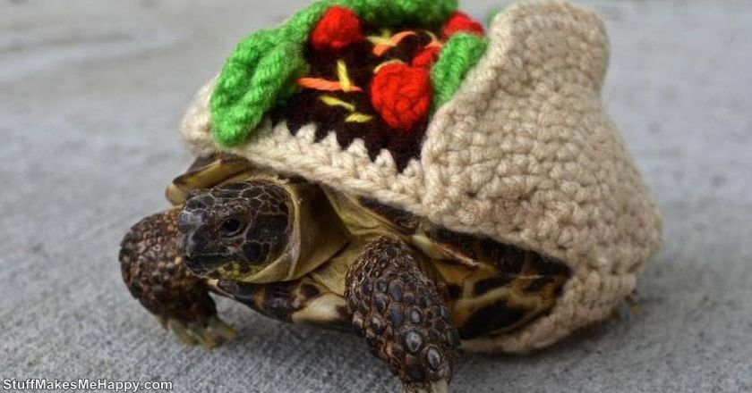 8. Even a turtle brought festive sweater