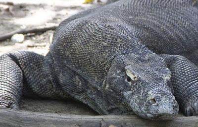 Kapan Waktu Yang Tepat Berkunjung ke Taman Nasional Komodo
