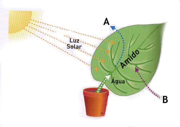 Amido, Formado Pela Fotossíntese a Partir de Dióxido de Carbono (Co2)