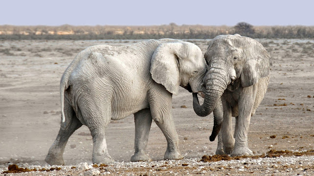 Elephant-Facts