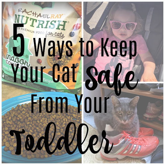 5 Ways to Keep Your Cat Safe from Your Toddler