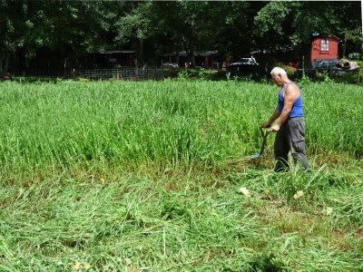 Dan scything the grass.
