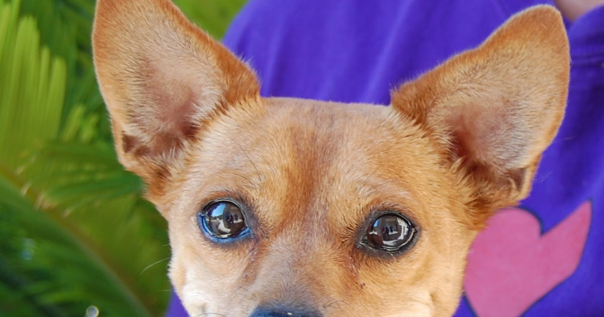 Diabetic Dog Rescue