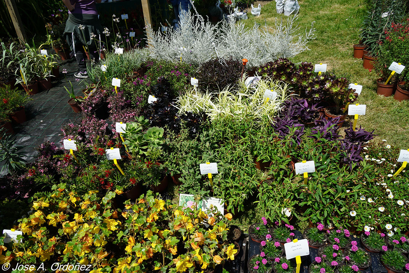 Plantas perennes exterior beautiful elegant top best for Plantas perennes exterior