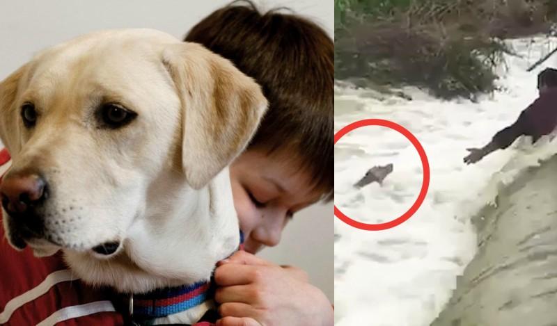 Αυτή είναι η πιο αγχωτική διάσωση σκύλου! (βίντεο)