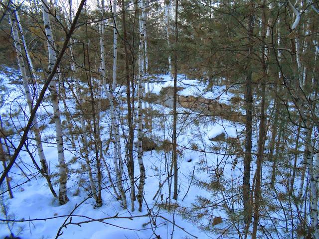Основание каменной стены за деревцами