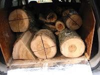 楠の木を積み込む